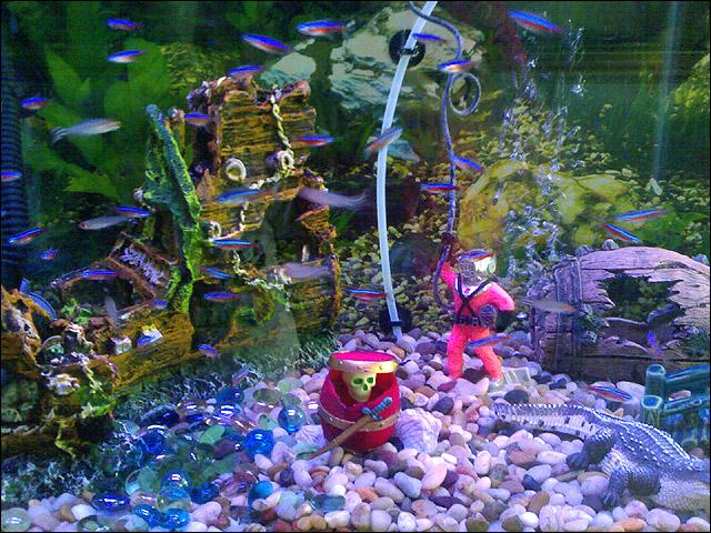 Aquarium Decoration Petland Dunwoody