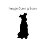 Petland Dunwoody Puppies For Sale Komondor